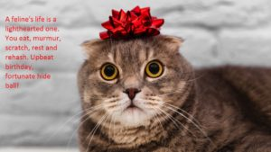 Happy-Birthday-Wishes-For-Cats