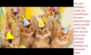 Birthday Wishes for your Cute Cats